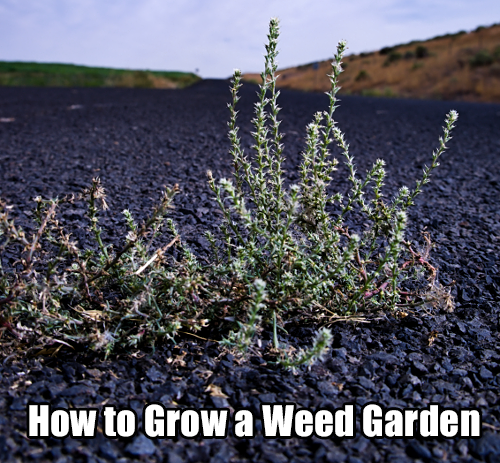 How to Grow a Weed Garden